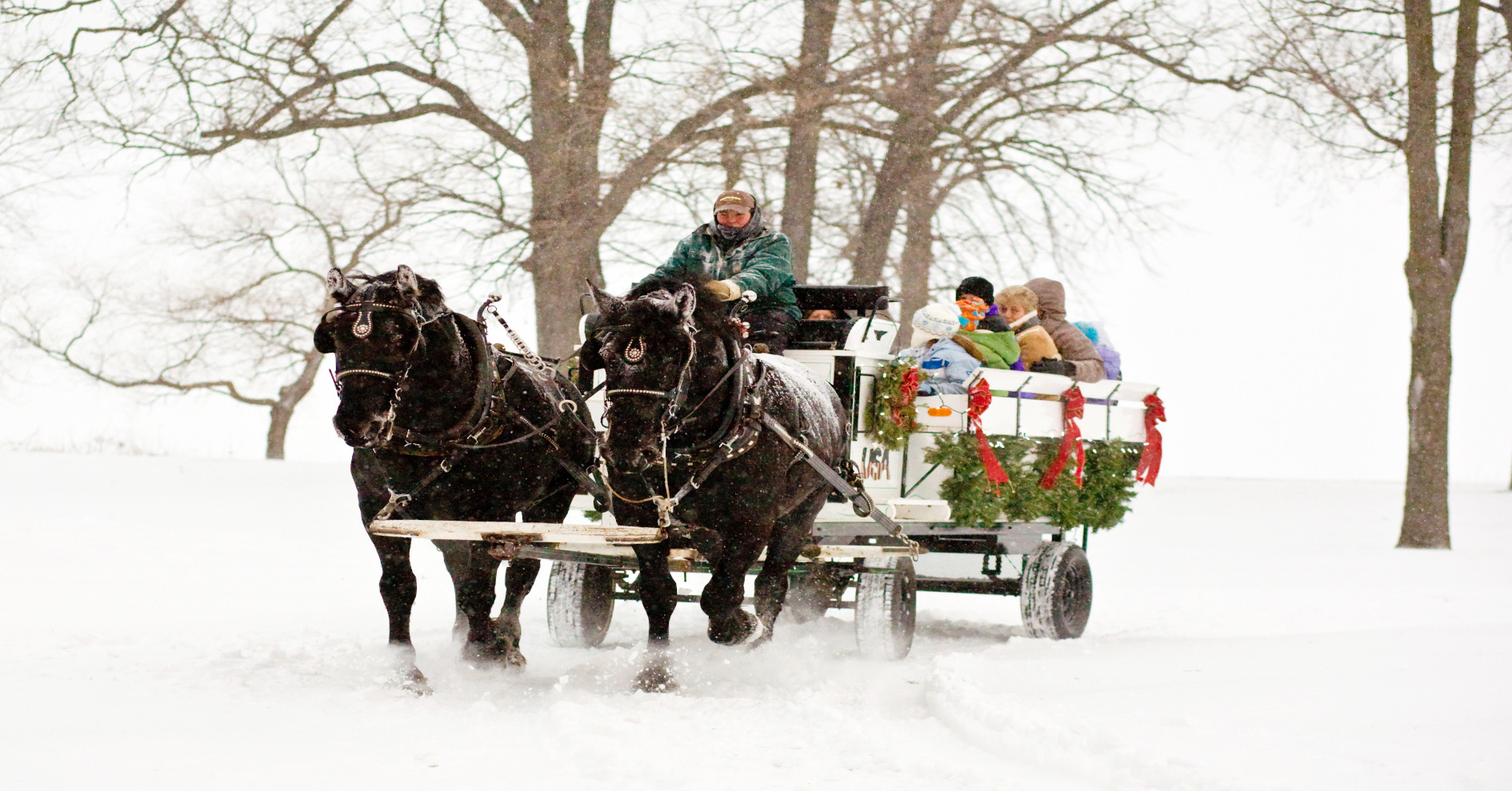 Deck the Halls-horse-wagon-home page banner027.JPG